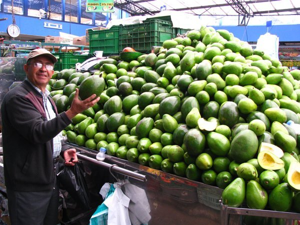 4424187-My-host-Jamie-Holding-a-Huge-Aguacate-4